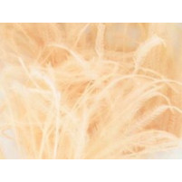Ostrich feather fringe Chanpagne