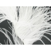 Ostrich feather fringe White