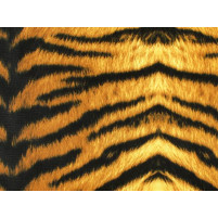 Tiger print brown black lycra